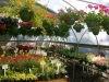 Greenhouse (3)