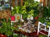 Houseplants (3)