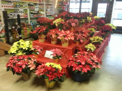 poinsettia-table